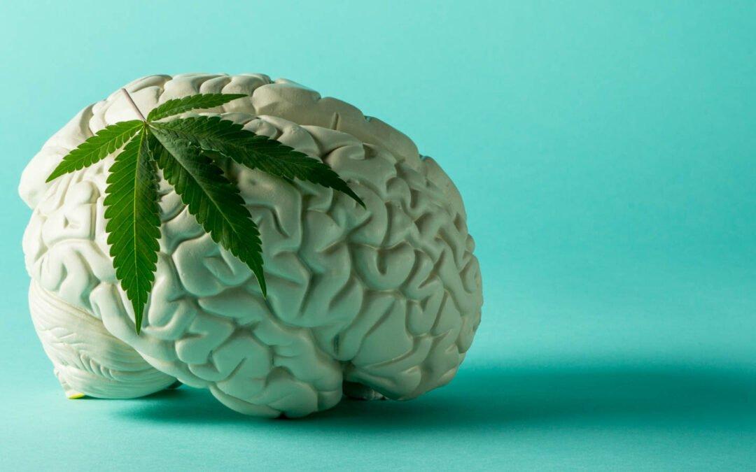Hur CBD-olja påverkar vårt endocannabinoidsystem