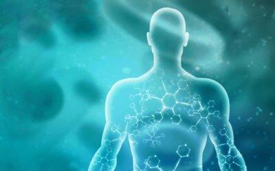 Vad är det endocannabinoida systemet (ECS)?