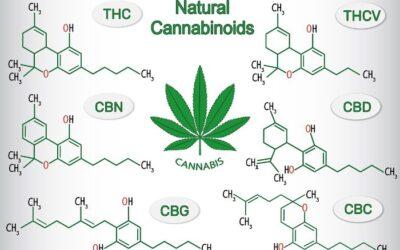 Vad är cannabinoider?